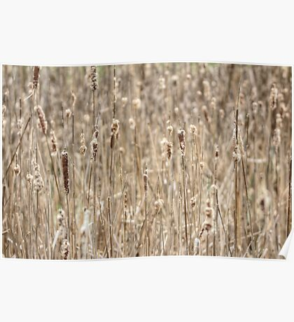 Cattails In The Wind Poster
