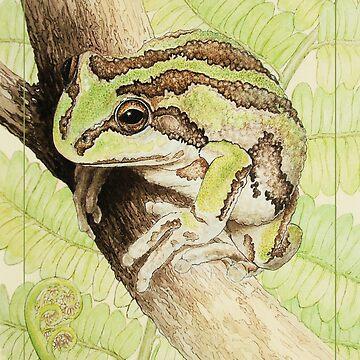 Pensive (Alpine tree frog - Litoria verreauxii alpina) by LauraGrogan