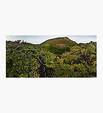 Mt. Field Fagus Photographic Print