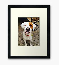 Zoey the Dog Framed Print