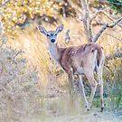 bambi by ALEX GRICHENKO