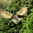 European Eagle Owl  by larry flewers