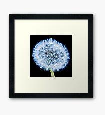 Blue Dandelion Framed Print