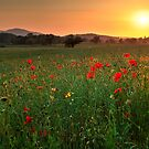 Poppy fields, Worcestershire by LisaRoberts