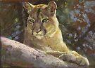Mountain Lion by Lyn Green