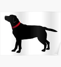 Black Labrador with Red Collar Poster