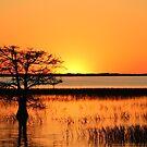 Bald Cypress Sunset by Jim Roche