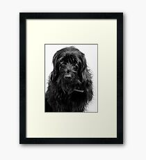 Hang Dog face Framed Print