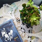 Succulents with Book Photograph by Andrea Turner