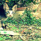 Cat Day! by Vivek George Koshy