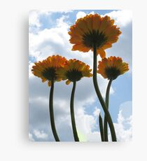 Up to the Sky Canvas Print