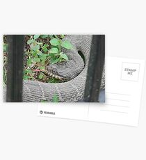 """The Fork-ed Tongue """"Water Snake"""" -  Best Viewed Larger Postcards"""