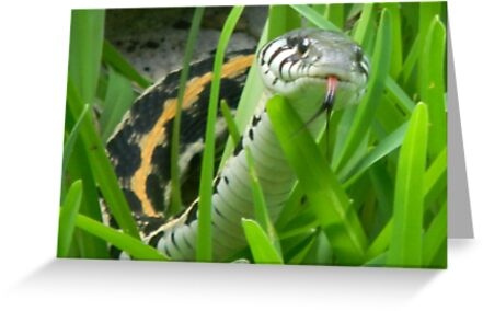 Black-Necked Garter Snake Sniffs the Air by Navigator