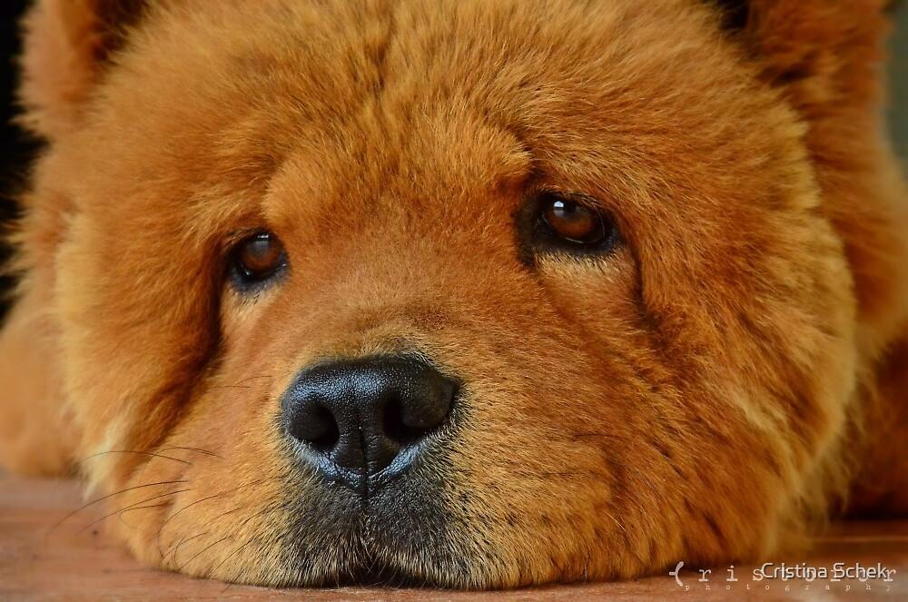 Bruno, the bear by Cristina Schek