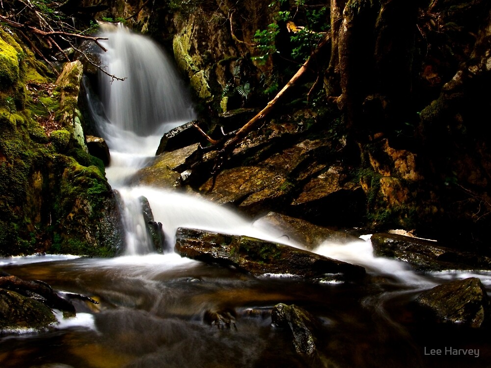 Glistening Wet Rocks of Cradle Mountain by Lee Harvey