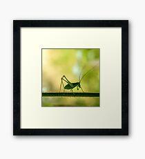 cricket in green  Framed Print