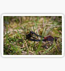 Mating Dragonflies Sticker