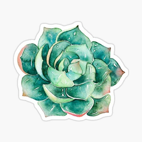 Watercolor Succulent sticker   Sticker