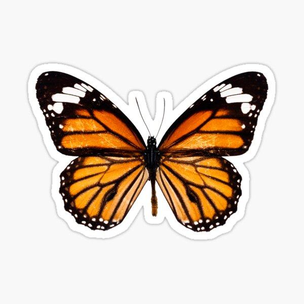 Monarch butterfly sticker Sticker