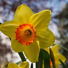 Happy Spring Blossom by Georgia Mizuleva