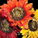 Sunflower Times 3 by Sherry Hallemeier