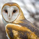 The Utterly Fascinating Barn Owl by Mikell Herrick