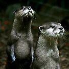Otters No.1 by Erin Davis