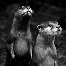 Otters No.2 by Erin Davis