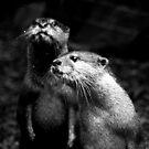 Otters No.4 by Erin Davis