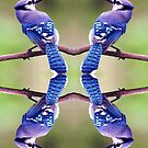 Four Bluebirds by Feraloidies