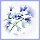 ~ Bluebells Pillow ~ by Brenda Boisvert