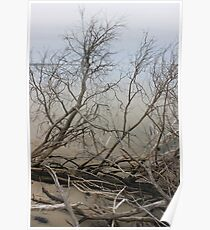 Bare Beach Trees Poster