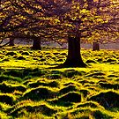 Petworth gold by MsheArt2