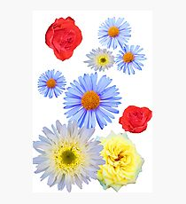Colorful flowers like living Photographic Print