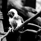 Monkey Business No.6 by Erin Davis