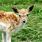 Little Deer No.1 by Erin Davis