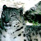 Snow Leopard No.1 by Erin Davis