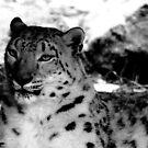 Snow Leopard No.2 by Erin Davis