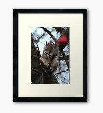 Squirrel Framed Print