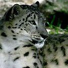 Snow Leopard No.3 by Erin Davis