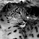 Snow Leopard No.4 by Erin Davis