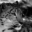 Snow Leopard No.6 by Erin Davis