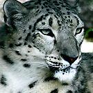 Snow Leopard No.7 by Erin Davis