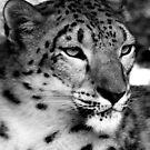 Snow Leopard No.8 by Erin Davis