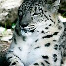Snow Leopard No.11 by Erin Davis