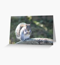 Squirrel On The Stone Greeting Card