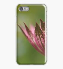 Astrantia Macro iPhone Case/Skin