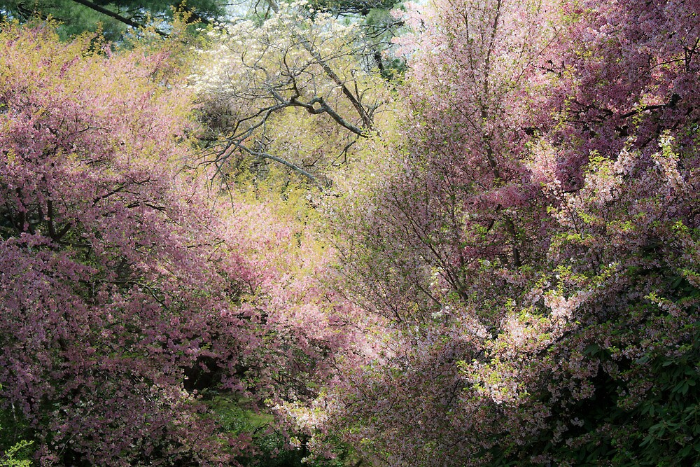The Softness of Spring by Lynn Wiles