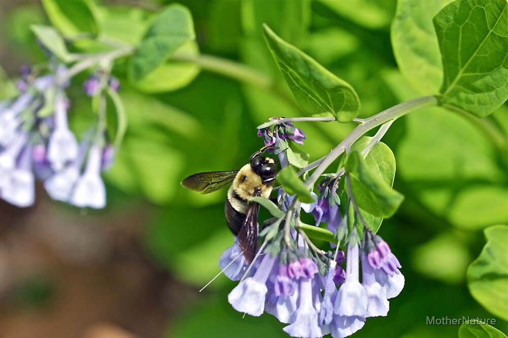 Bumbling Around by MotherNature