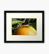 Yellow Insect on an Orange Framed Print